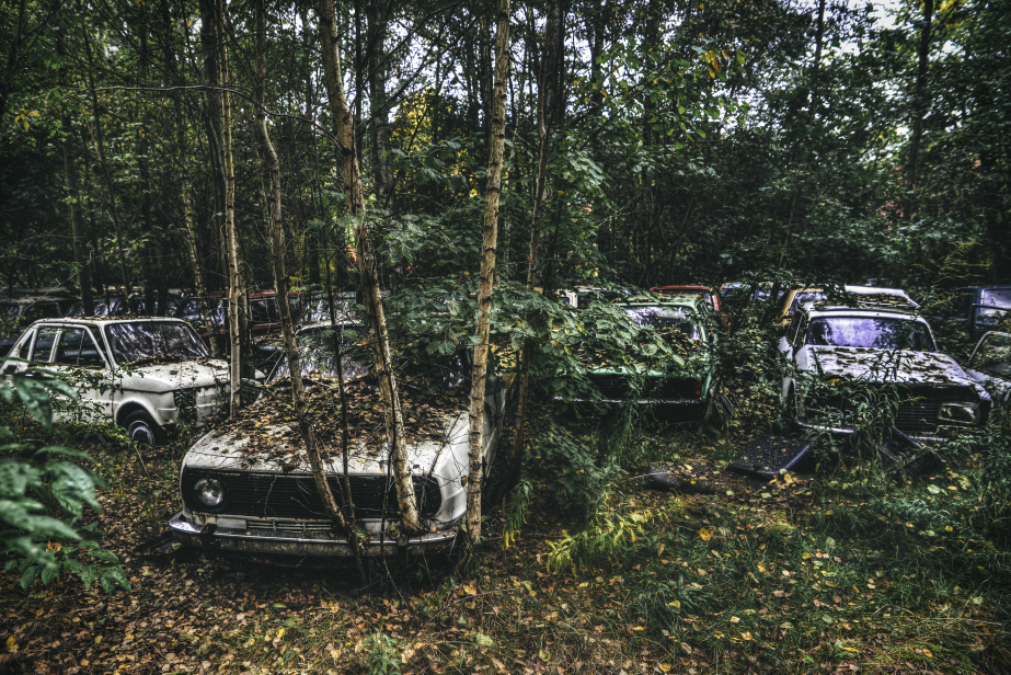 Cemetery car K. Warsaw: At certain moments of the visit to the abandoned facility, you can feel some jungle, where a few decades ago was a city. Especially when we see a tree